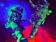 Future Pluto x Baby Pluto Deluxe Album Download