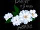 Kashcpt Jasmine Mp3 Download